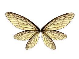 silver fairy wings - Google Search