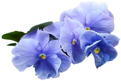 blue flowers png filler