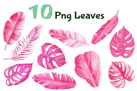pink palm leaf png - Google Search