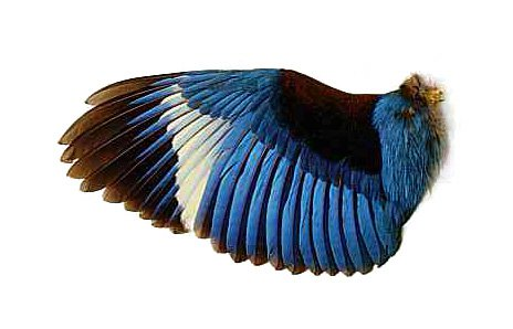 image_bird003.jpg (464×298)