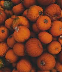 vintage pumpkin patch aesthetic tumblr - Google Search