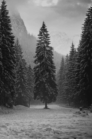 snow winter Black and White landscape mountains nature forest Woods ... Rebloggy snow winter Black and White landscape mountains nature forest Woods pines