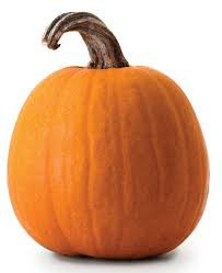 pumpkin photo - Google Search