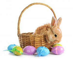 Fluffy foxy rabbit in basket with Easter eggs isolated on white – Regis Centre