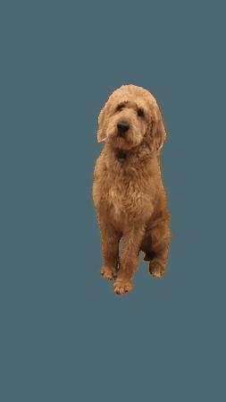 Buddy the dog