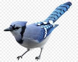 blue bird png - Google Search