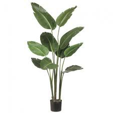 tropical potted plants - Google Search
