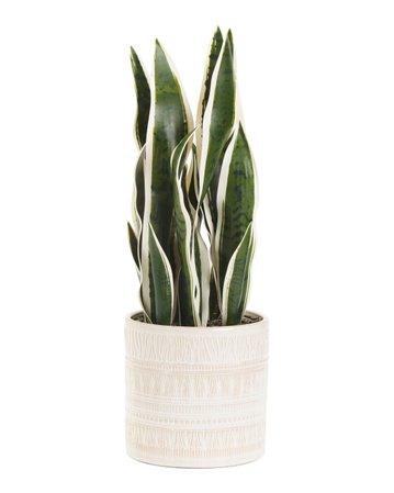 24in Faux Plant In Glaze Pattern Pot - Living Room - T.J.Maxx