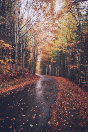 fall leaves tumblr autumn aesthetic cute