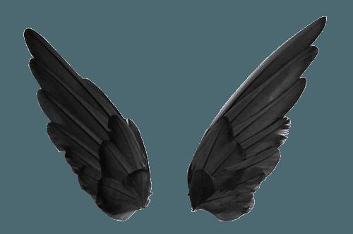 cute birds black feathers