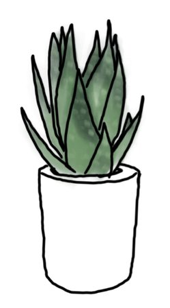 HOLLY KRONOFF DIGITAL ART Aloe Plant