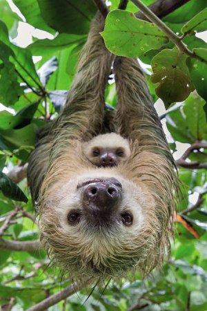cute sloth photo - Google Search