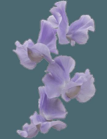 purple png filler