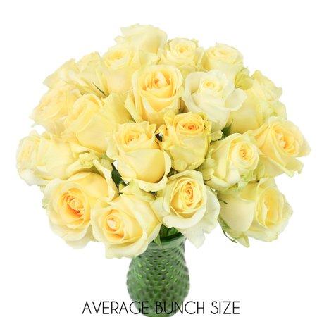 Lemon Sherbet Yellow Sweetheart Roses   FiftyFlowers