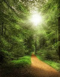 https://c.pxhere.com/photos/8a/0c/forest_path_forest_away_nature_trees_sunny_summer_landscape-560580.jpg!d - Поиск в Google