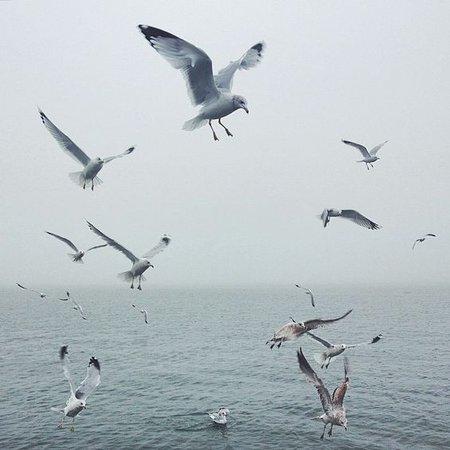 seagull mermaid aesthetic