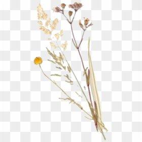 #polyvore #filler #png #plants #flower #freetoedit - Aesthetic Art Hoe Flower, Transparent Png - vhv