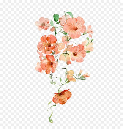 aesthetic orange flowers png - Google Search