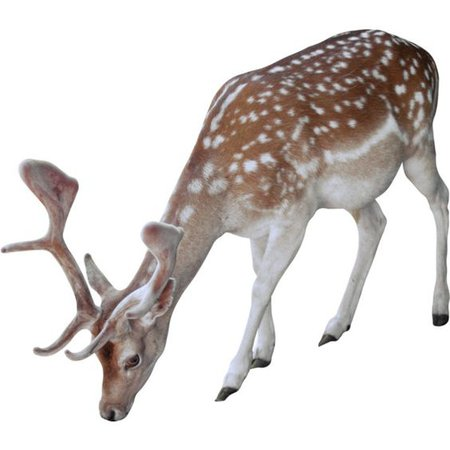 brown deer animal filler png