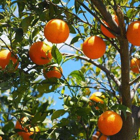 orange grove aesthetic photography