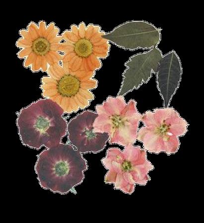 flower png filler