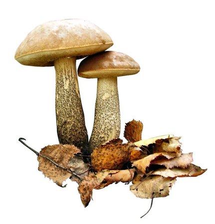 mushrooms & autumn leaves