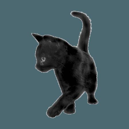 black cat png filler