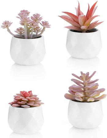 Viverie Faux Succulents in White Ceramic Pots for Desk, Office, Living Room, and Home Decoration - Fake Plants Included (Set of 4 Artificial Succulents): Home & Kitchen