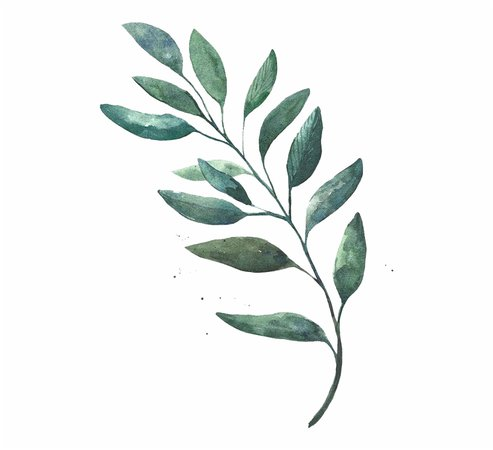20-206268_watercolor-leaves-png-free-download-watercolor-leaves-png.png (920×839)