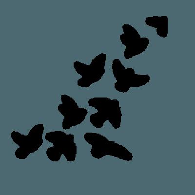 birds border