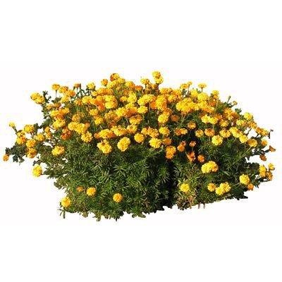 these flowerz mak me wet