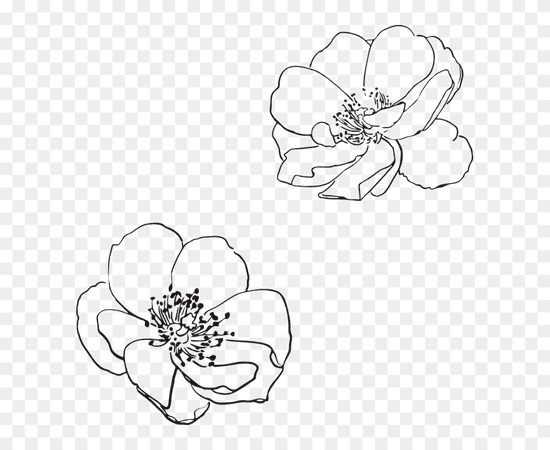 Apple Blossom Clipart Black And White Freeuse Free - Transparent Flower Outline Png (#5481226) - PinClipart