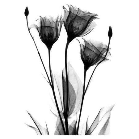 black flower - Google Search