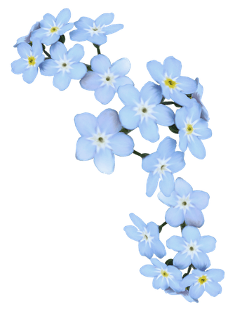 light blue aesthetic transparent - Google Search