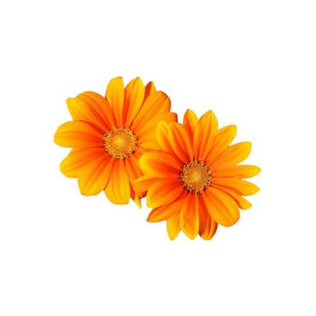 orange flowers png filler