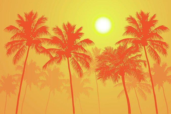summer day orange - Google Search