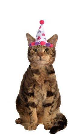 cat birthday costume - Pesquisa Google
