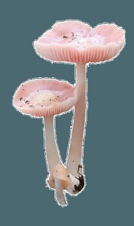 Pale Pink Mushroom png