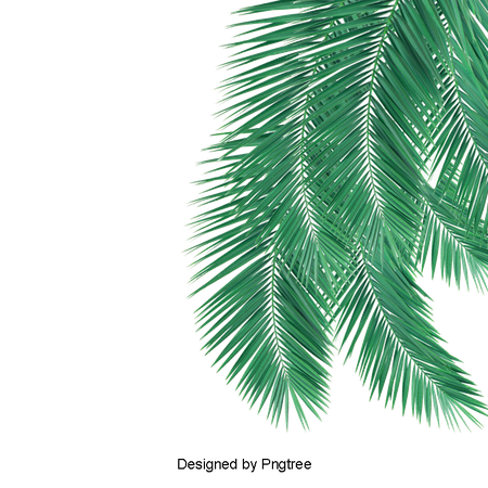 Green Palm Leaves Picture Material, Green Leaves, Green, Coconut PNG and PSD File for Free Download
