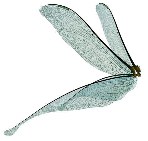blue dragonfly wings - Google Search