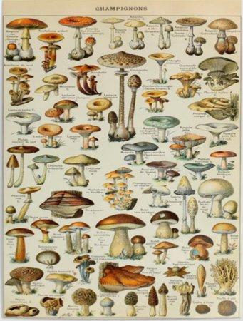 vintage mushroom poster