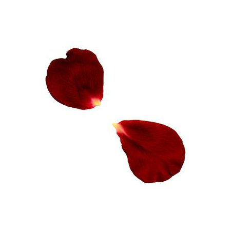 red rose petal png