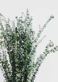 sage green aesthetic - Google Search