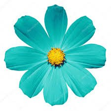 turquoise flower - Google Search