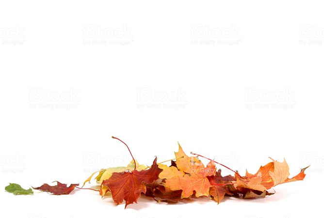 Autumn Leave Stock Photo & More Pictures of Autumn | iStock