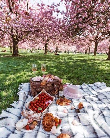 picnic spot