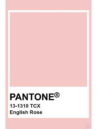 Pantone - English Rose
