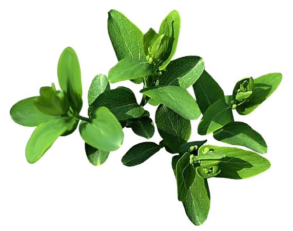 green png filler
