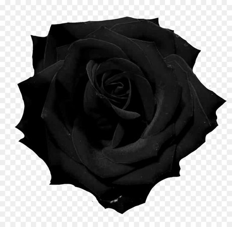black rose png - Pesquisa Google