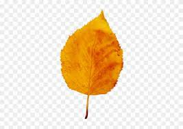 orange fall leaf real png - Google Search